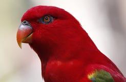 Papegaai in Kuala Lumpur Bird Park Stock Afbeelding