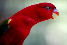 Papegaai in Kuala Lumpur Bird Park Royalty-vrije Stock Afbeelding