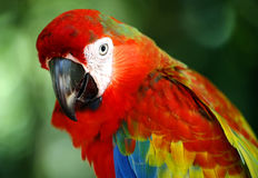 Papegaai in Kuala Lumpur Bird Park Stock Foto