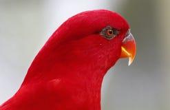 Papegaai in Kuala Lumpur Bird Park Royalty-vrije Stock Fotografie