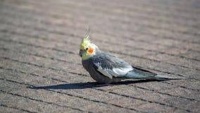 Papegaai op de stoep stock fotografie
