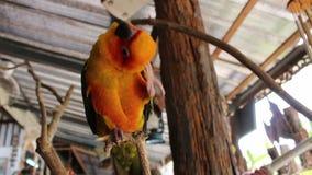 Papegaai op de tak stock videobeelden