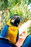 Papegaai op een tak Royalty-vrije Stock Foto's