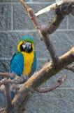 Papegaai op een tak Stock Afbeelding