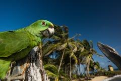 Papegaai op het strand voor palmen Royalty-vrije Stock Foto's