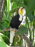 Papegaai in shadown van een palm Royalty-vrije Stock Afbeelding