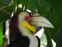 Papegaai in shadown van een palm Royalty-vrije Stock Afbeeldingen