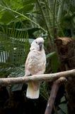 Papegaai in tropische tuin Stock Fotografie
