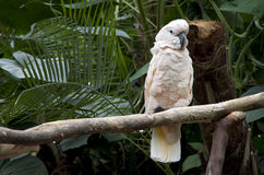 Papegaai in tropische tuin Stock Foto