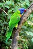 Papegaai, vriendschappelijke dieren bij de Dierentuin van Praag Stock Foto