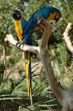 Papegaaien stock fotografie
