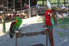Papegaaien in de dierentuin royalty-vrije stock afbeelding