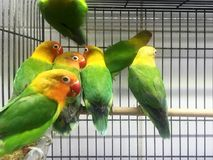Papegaaien in de kooi royalty-vrije stock afbeeldingen