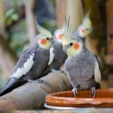 Papegaaien die op een toppositie rusten royalty-vrije stock fotografie