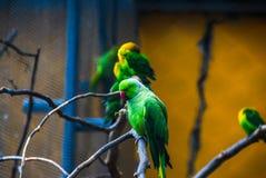 Papegaaien in een kooi Royalty-vrije Stock Foto's
