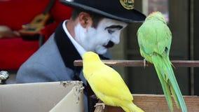 Papegaaien en blijspelacteur stock video