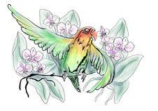 Papegaaiendwergpapegaai en bloemen royalty-vrije illustratie