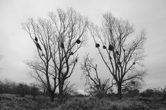 Papegaaiennesten Royalty-vrije Stock Foto's