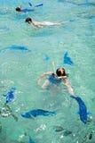 Papegaaivissen van DE Palm Island Aruba Royalty-vrije Stock Afbeeldingen