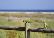 Papegaaivogel Royalty-vrije Stock Fotografie