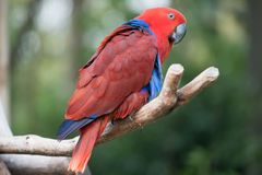 Papegaaivogel Stock Foto's