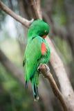 Papegaaivogel Royalty-vrije Stock Afbeeldingen