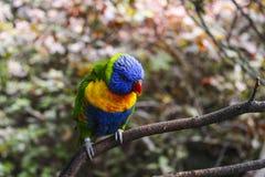 Papegaaizitting op de Zomer Exotische Kleurrijk van taktenerife stock afbeeldingen