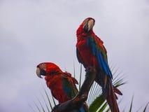 Papegaaizitting op een boom in de Caraïben stock foto's