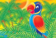 papegoja 001 Vektor Illustrationer