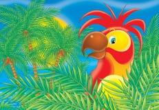 papegoja 003 Vektor Illustrationer