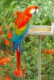 papegoja Arkivbild