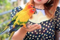 Papegoja Royaltyfri Foto