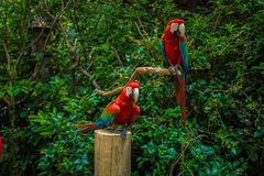 papegoja Fotografering för Bildbyråer