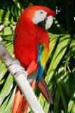 papegoja 9 Royaltyfria Bilder