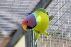 papegoja Royaltyfria Foton