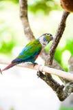 Papegoja färgrik papegoja, arapapegoja, färgrik ara Royaltyfria Bilder