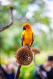 Papegoja färgrik papegoja, arapapegoja, färgrik ara Arkivbilder