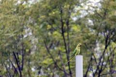 Papegoja - härlig fågel Arkivfoto