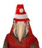 Papegoja i den Santa Claus hatten Royaltyfri Fotografi