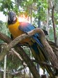 Papegoja i en zoo av Thailand royaltyfri bild