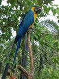 Papegoja i en zoo av Thailand royaltyfri fotografi