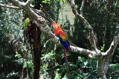 Papegoja i träd Royaltyfri Fotografi
