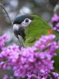 Papegoja i tr?d royaltyfria bilder