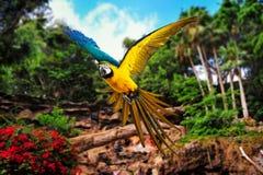 Papegoja i tropiskt landskap arkivbild