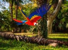 Papegoja i tropiskt landskap Arkivfoto