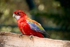Papegoja i zoo royaltyfri fotografi
