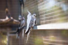 Papegoja i zoo Arkivbild