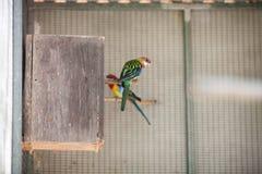 Papegoja i zoo Royaltyfri Bild