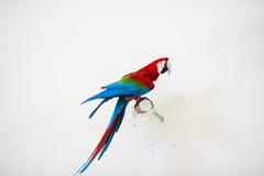 Papegoja i zoo Royaltyfria Foton