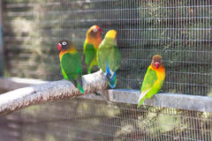 Papegoja i zoo Arkivbilder